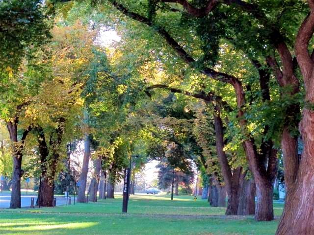 جامعة ألبرتا-الصور-5
