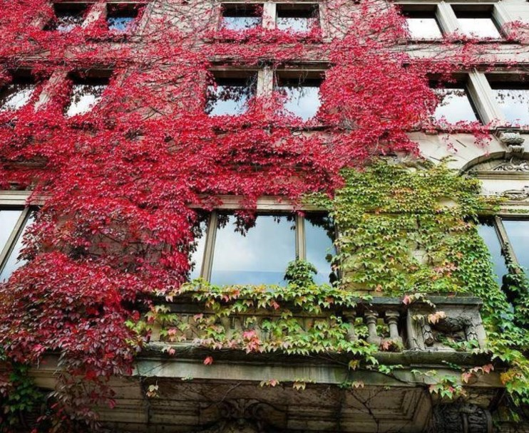 McGill University-Photos-6